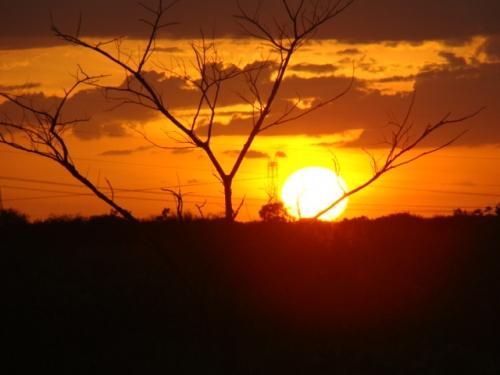 El sol de los Venados
