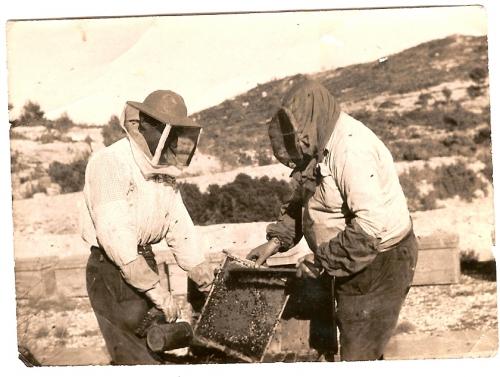 Imagen cosechando miel en los a os cincuenta grupos - Los anos cincuenta ...